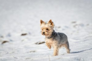 dog, small, winter