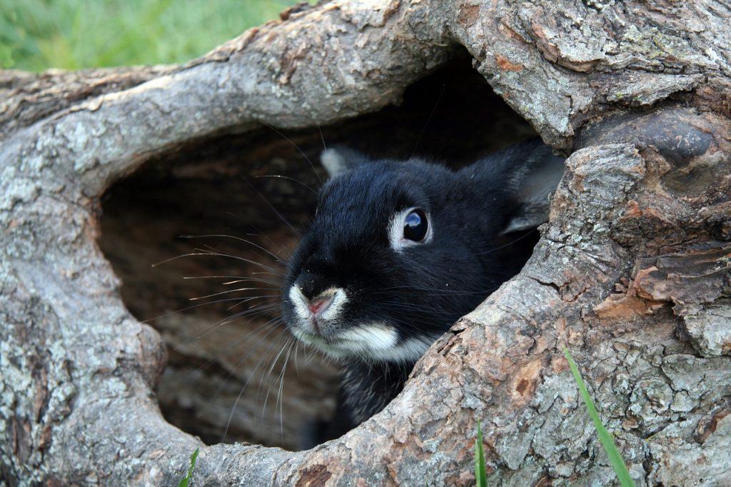bunny, rabbit, black otter bunny