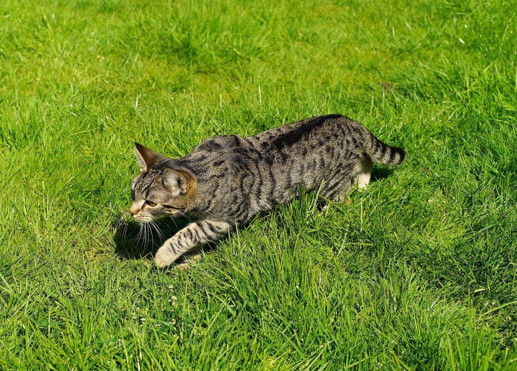cat, domestic cat, garden