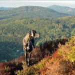 great dane watches autumn