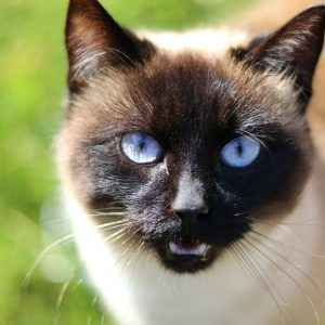 cat, cat head, cat face