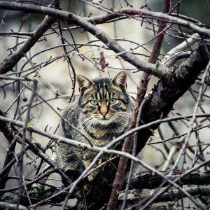 cat, cat in the tree, animal