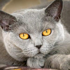cat, mieze, domestic cat-4673950
