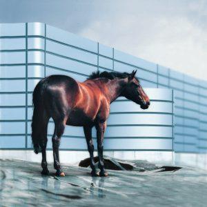 metaal-paard