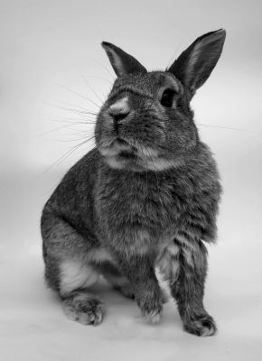 rabbit, cute, portrait